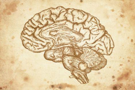 M neuroni crescita nucleare