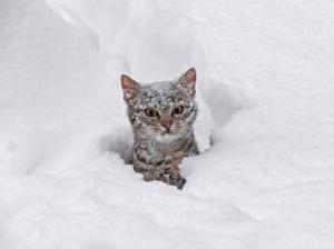 cat in snow not happy
