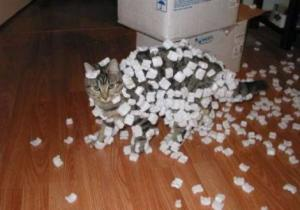 cat with static polystyrene attached